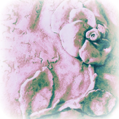 Sculpted Rose