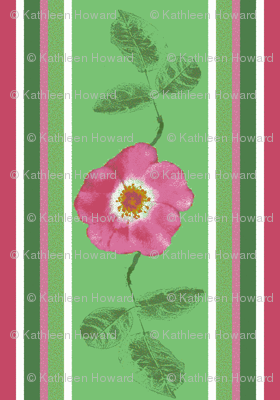 stripes_and_single_rose_with_2_leaves_2_Picnik_collage-ch