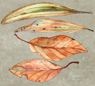 Australian Leaves