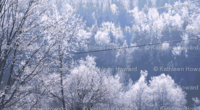 l_Crop_of_frost_002-ch