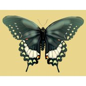 Rswallowtail_pillow_shop_thumb