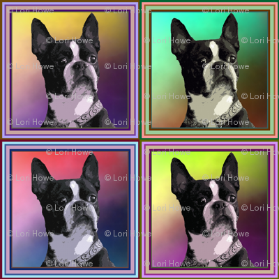 Boston_Terriers