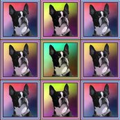 Rboston_terriers_shop_thumb