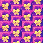 Rcross_e_c_purple_and_yellowjohnie-jump-ups_6_28_09_006_shop_thumb