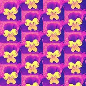 cross_e_c_purple_and_yellowjohnie-jump-ups_6_28_09_006