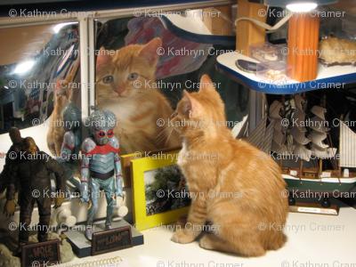 Cat reflecting