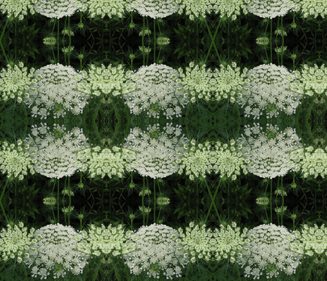 Queen Anne's Lace fabric by pinkchamplain on Spoonflower - custom fabric