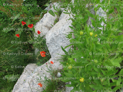 Flowers in the stone wall