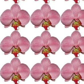 Floral Photographic flower_pattern_orchid_pink_small_2
