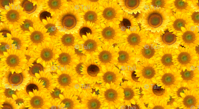 sunflower_patch