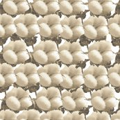Rcottonbuds_ed_shop_thumb