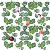 Rscattered_collard_greens2_ed_shop_thumb