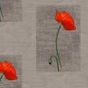 Rfenced_in_poppy_redder_shop_thumb