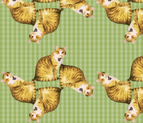 NewCatFabric-single fabric by sereniti1952 on Spoonflower - custom fabric