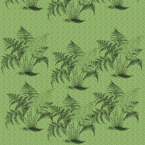 ferns01_green