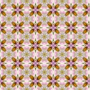 Solanum pattern I