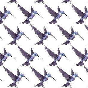 Purple and Blue Hummingbird