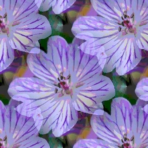 Lavender lilac Cranesbill
