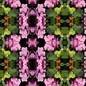 Rorchids_shop_thumb