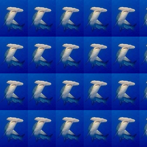 Hammerhead_Shark