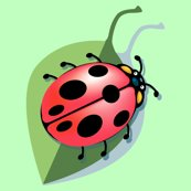 Rrrladybug2_shop_thumb