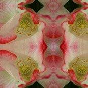 Rwhite-red_poppy_11x14_shop_thumb