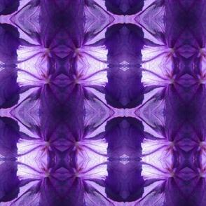 purplepetunia5385