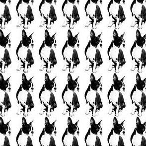perro-ed
