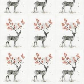deer webs