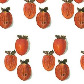 best persimmon