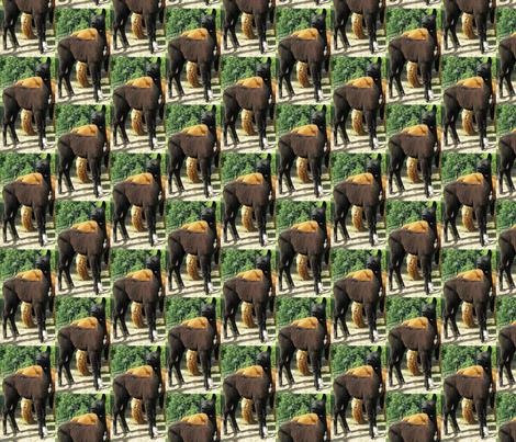Alpaca fabric by alpaca_lady on Spoonflower - custom fabric