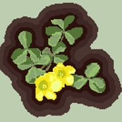 Rshamrock_1_from_photo_pale_green_background_shop_thumb