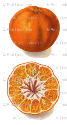 best tangerine