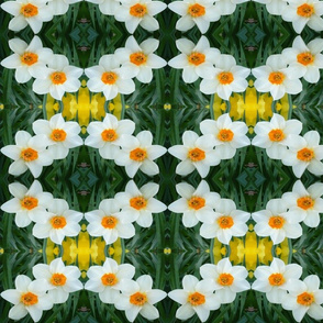 edit_3_stretch_daffodils