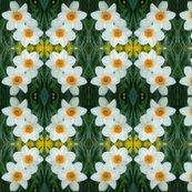 Rcrop_1g_daffodils_shop_thumb