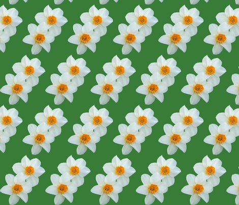 Rrdaffodils_with_green_background_shop_preview