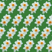 Rrdaffodils_with_green_background_shop_thumb