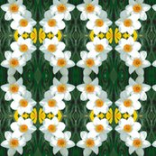 Edit_4_daffodils_shop_thumb