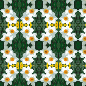 edit_4_daffodils-ch-ch-ch