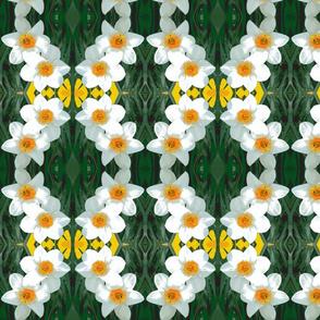 edit_4_daffodils-ch-ch-ch