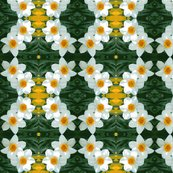 Redit_3_stretch_daffodils_ed_ed_shop_thumb