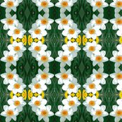 Rredit_4_daffodils_ed_shop_thumb