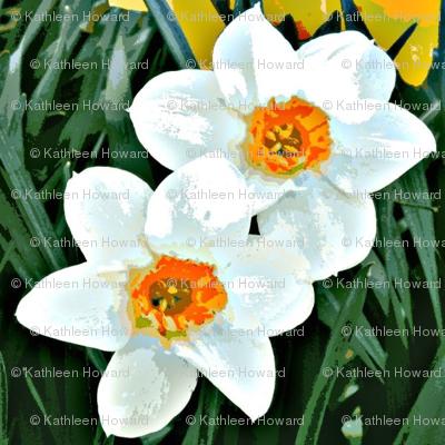 Dark Daffodils D-10