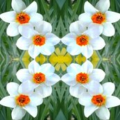 Rrunsharp_flowers_lighten_back_crop_daffodils-2007_002_ed_ed_ed_ed_shop_thumb