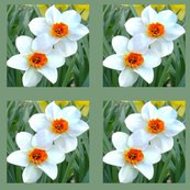 Runsharp_flowers_lighten_back_crop_daffodils-2007_002_ed_ed_ed_ed_ed_shop_thumb