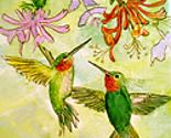 Rhummingbird_thumb