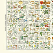 "42"" Vintage Botanical Charts"