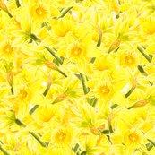 Rdaffodil-explosion_shop_thumb