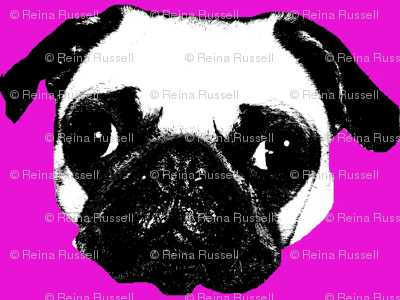Pug in Fuchsia