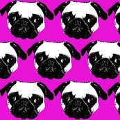 Rrpug-fuchsia_shop_thumb